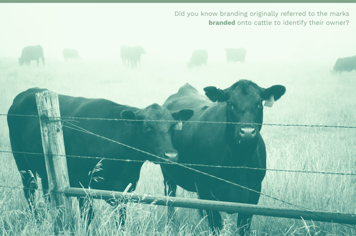 What is a brand? Cattle Picture | Jake Cooper Design